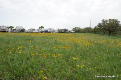 Wildflowers in Llano