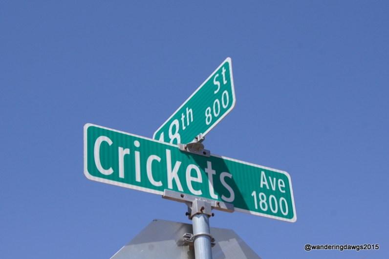Crickets Avenue in downtown Lubbock