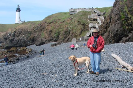 Henry and Blondie on the Beach at Yaquina Head Lighthouse