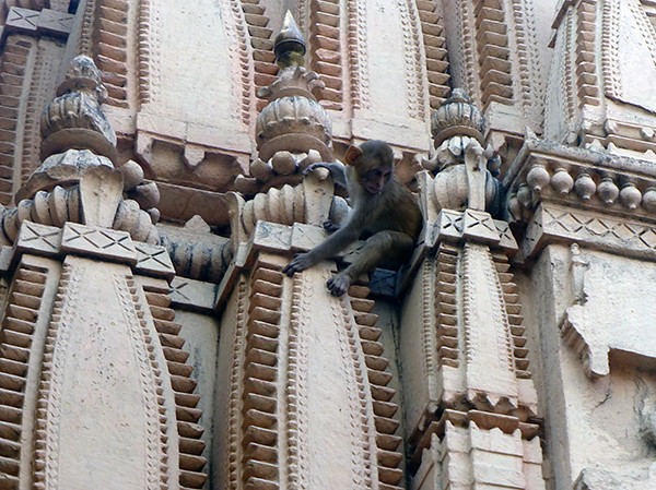 Monkey on Temple (Varanasi)