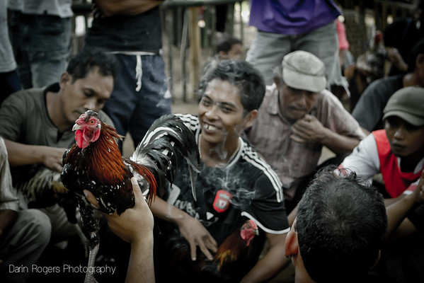 Men and rooster at a cock fight.