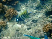 20110224_cool-looking-fish