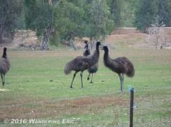 20110519_emus