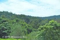 20110716_lush-greenery-in-malaysia