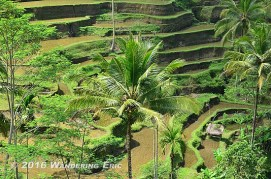 20110730_awesome-terraces