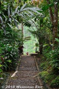20110730_coffee-plantation