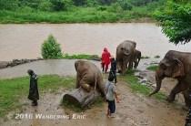 20110820_crazy-baby-elephant
