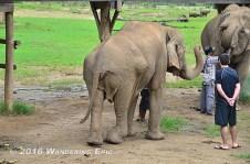 20110820_messed-up-elephant