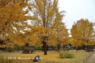 20111104_autumn-colors