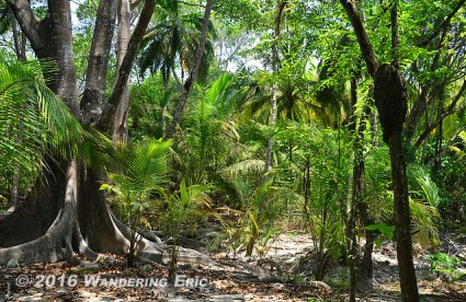 20140812_welcome-to-the-jungle