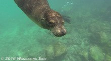 20140907_hey-there-sea-lion