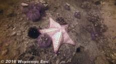 20150207_that-s-a-big-star-fish