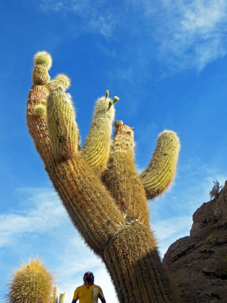 Cacti hand shape Bolivia
