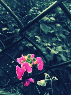 pink flower accented - making money blog