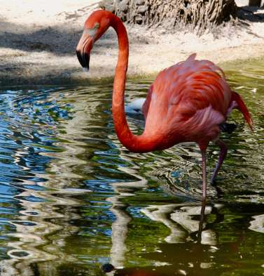 flamingo-gardens-12
