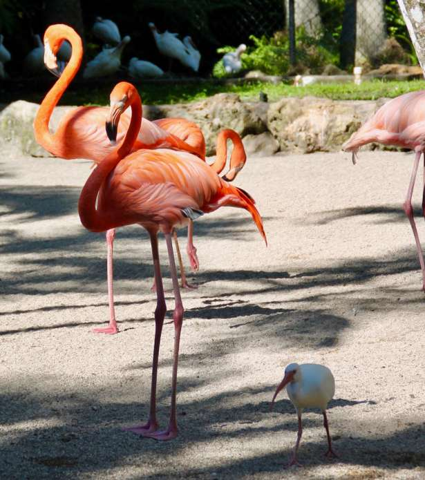 flamingo-gardens-13