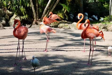flamingo-gardens-14
