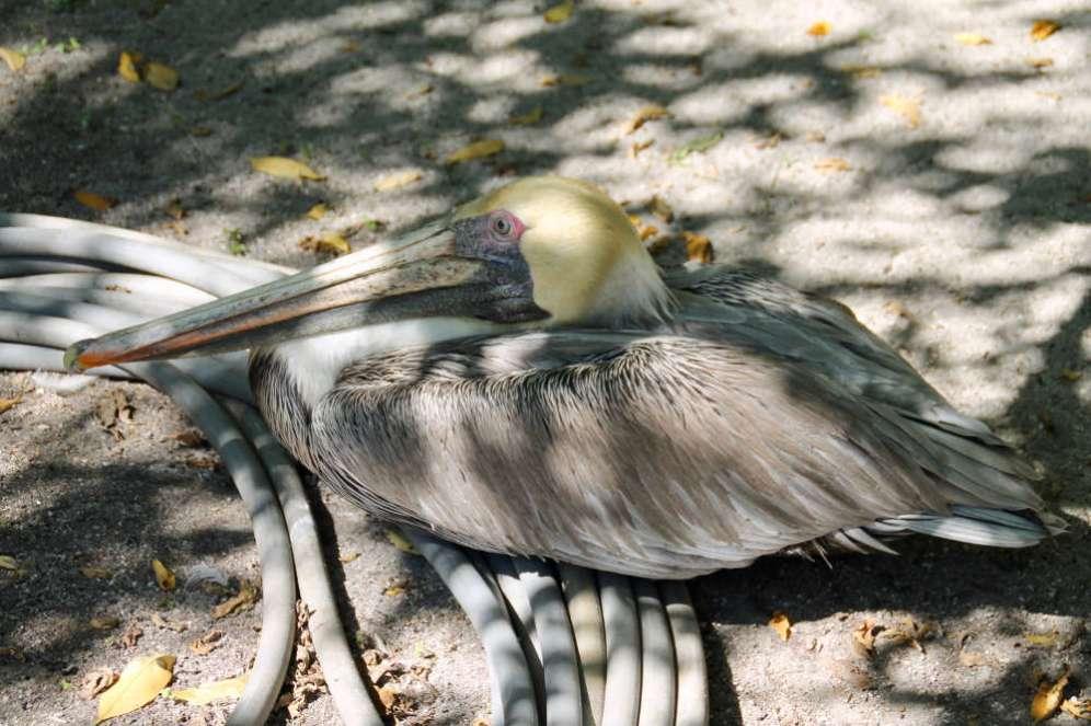 flamingo-gardens-2