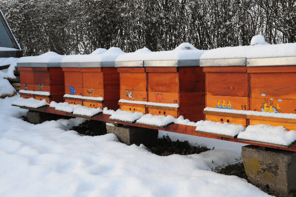 Row of bee hives in the snow Make money from the homestead by selling honey.