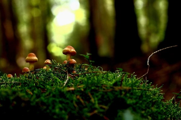 wild  mushrooms for food security