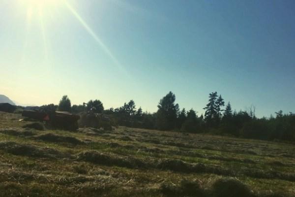 hay field being cut