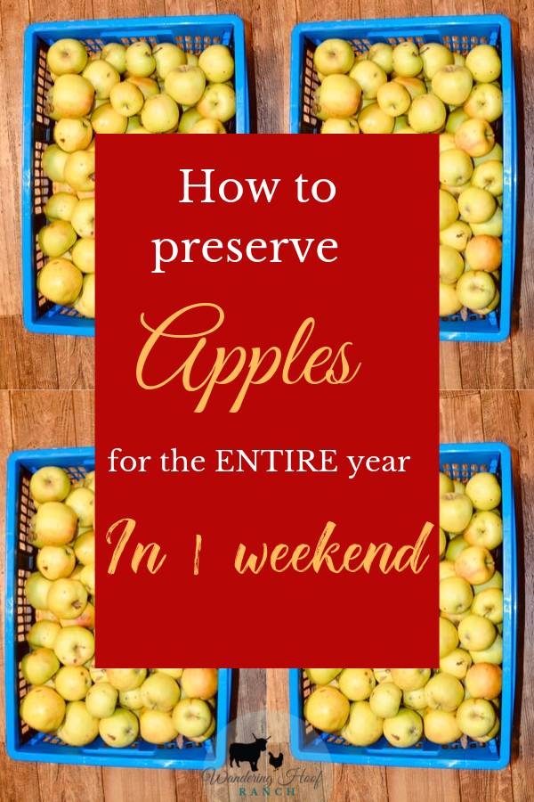 how to preserve apples for the entire year in 1 weekend