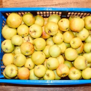 preserve apples