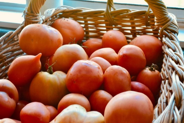 how to freeze tomatoes straight from the garden, basket of tomatoes