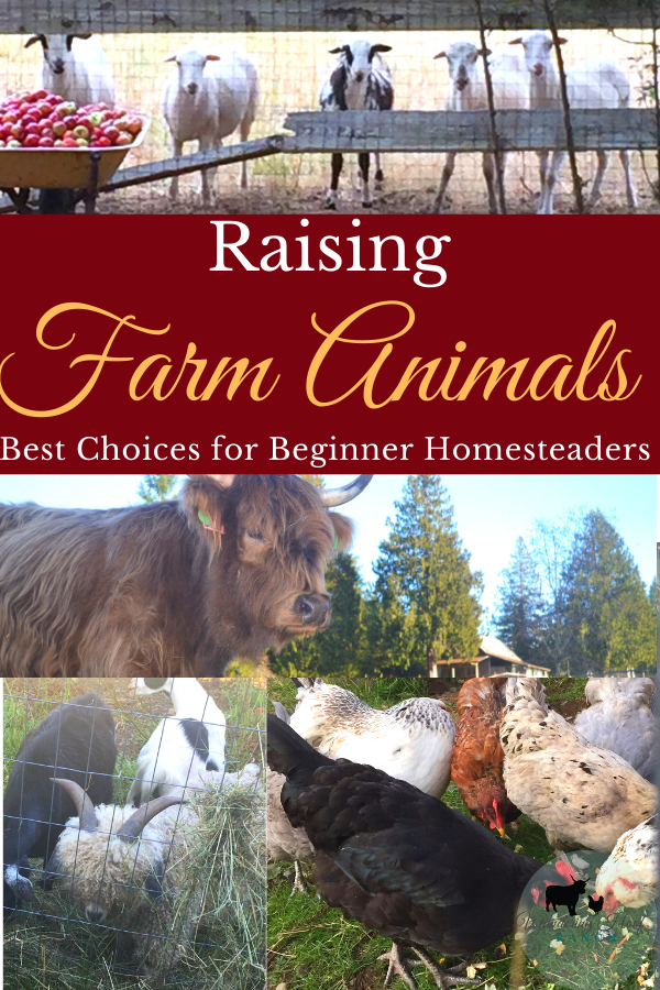 Raising Farm Animals, the best choices for beginner homesteaders