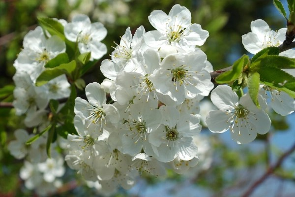 How to grow fruit trees and fruit bearing plants for beginners with tips and tricks for planting, maintance and preserving