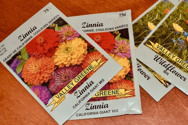 zinnia seed picture