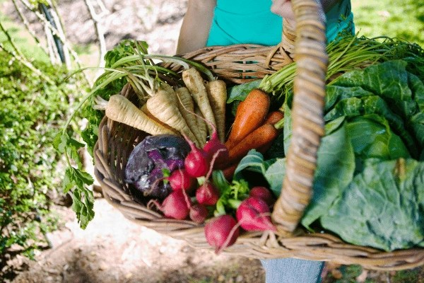 basket of fresh garden produce from the vegetable garden