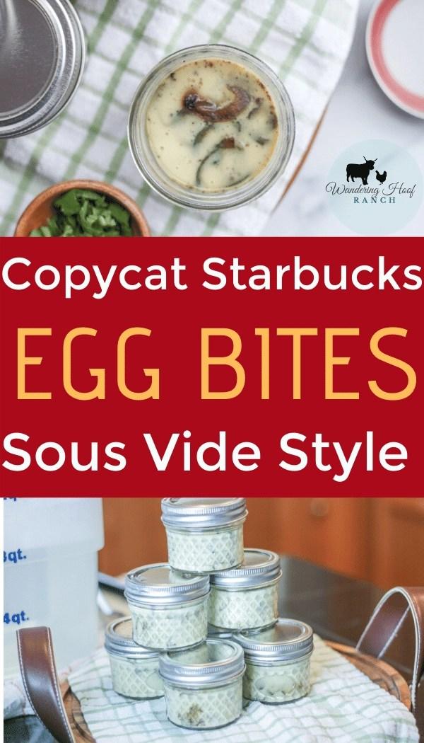 Copycat Starbucks Egg Bites Sous Vide Style!