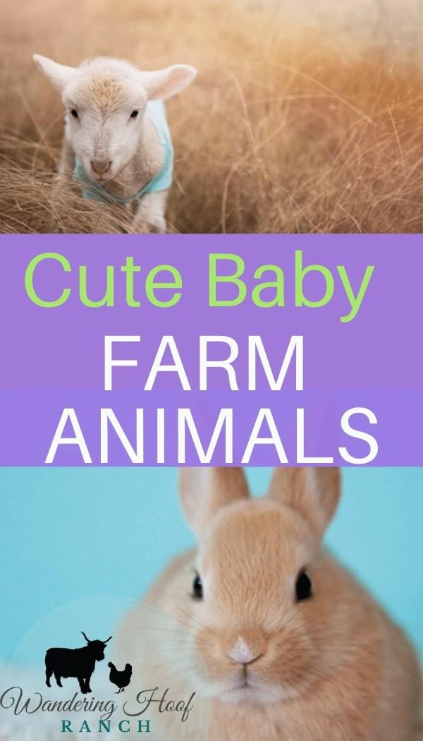 Cutest Baby Farm Animals