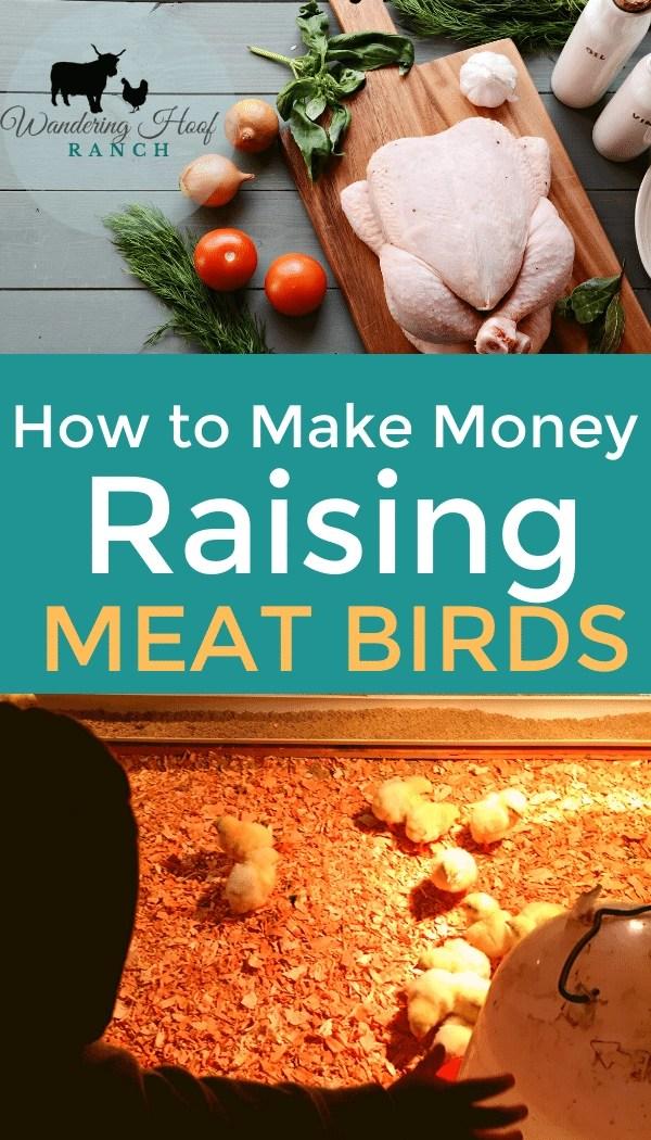 raising meat birds for profit