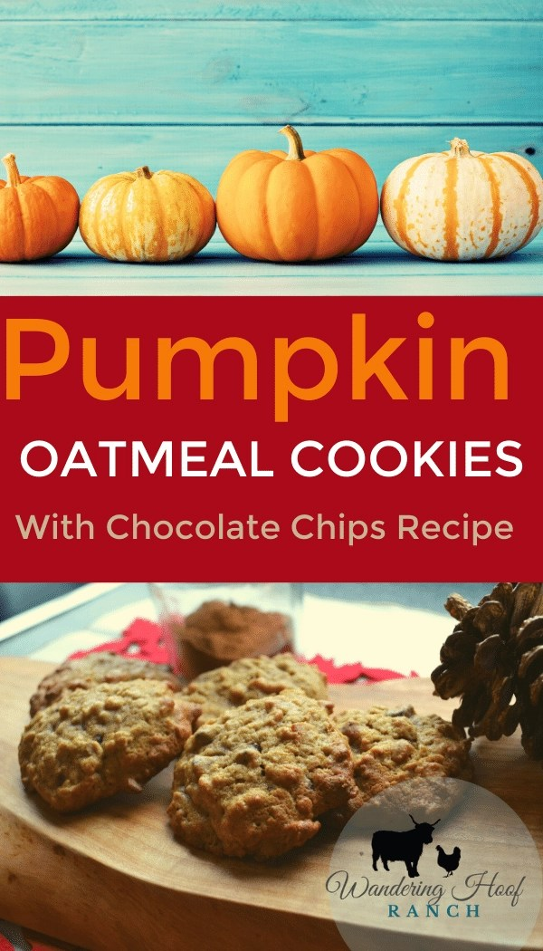 pumpkin oatmeal cookies with chocolate chips pin