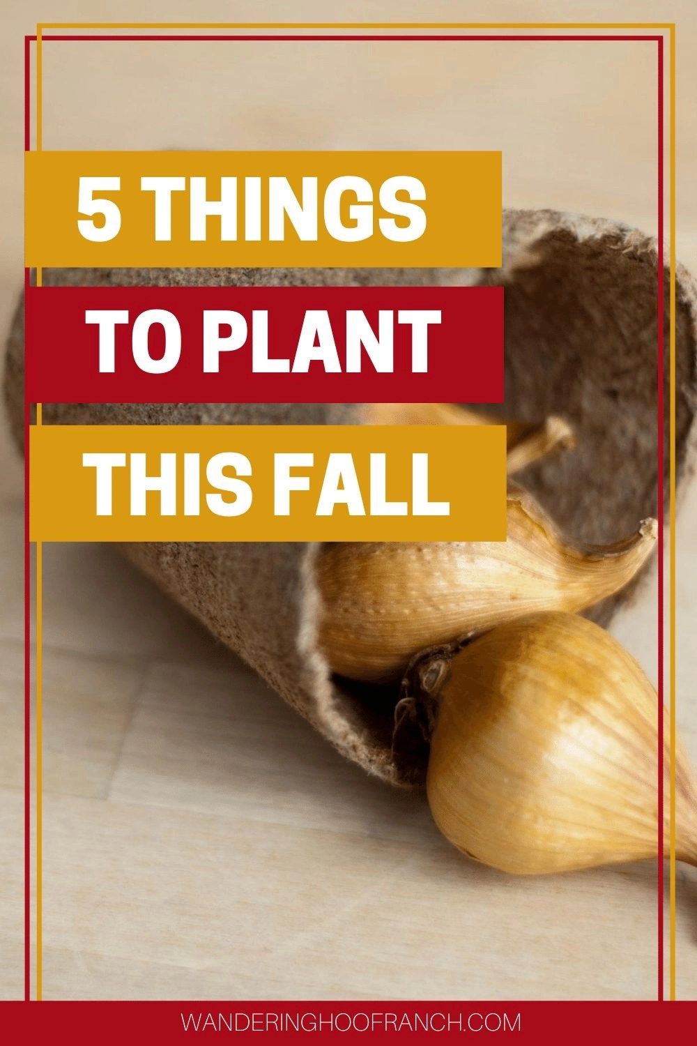 5 things to plant this fall image with bulbs in planter pot