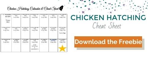 Chicken Hatching Cheatsheet opt in box