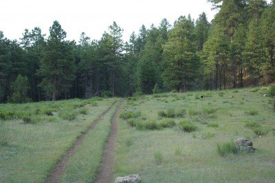 An old jeep track leads into a dark, wooded area near Canyon Vista Campground.