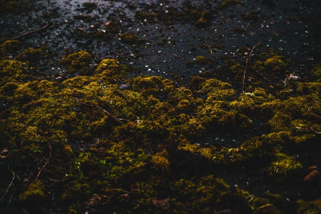 street moss in belfast