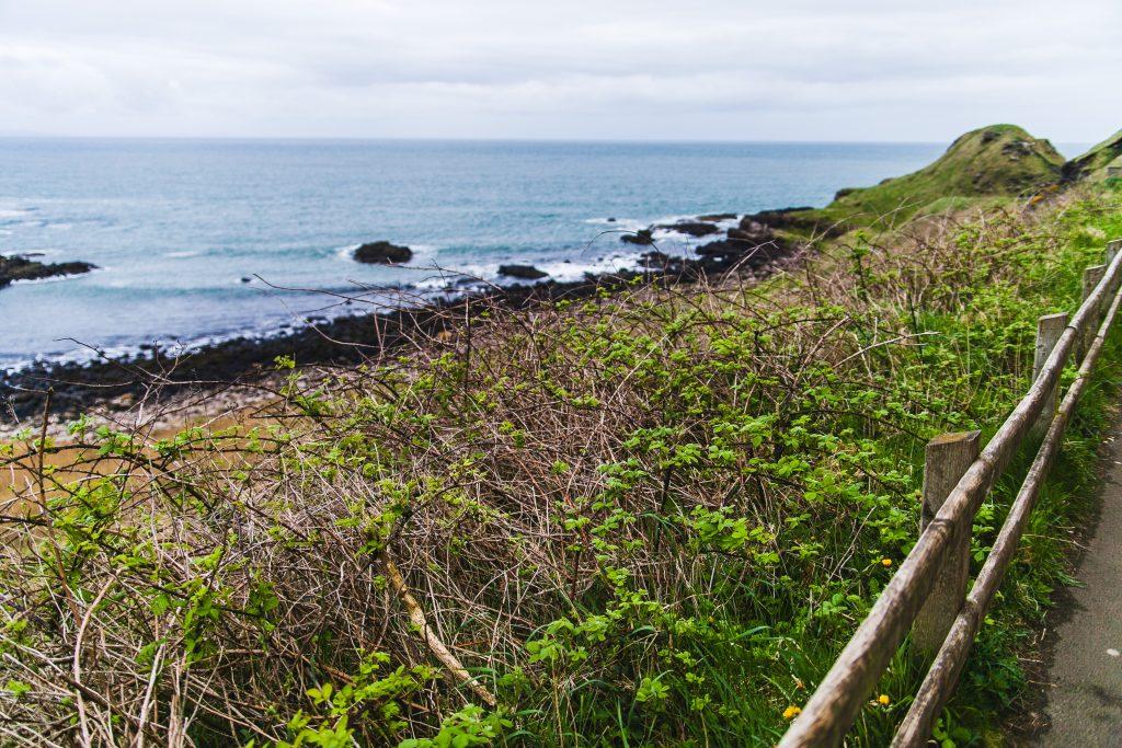 coast and vegetation in ireland