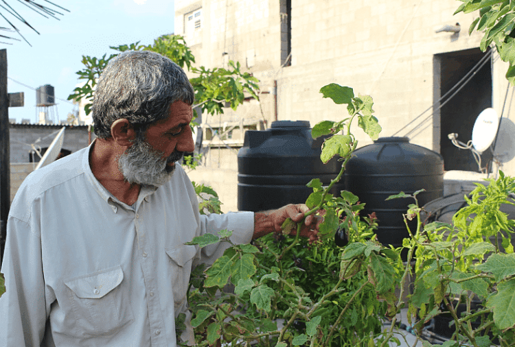 Rooftop gardens are helping mental health in Gaza