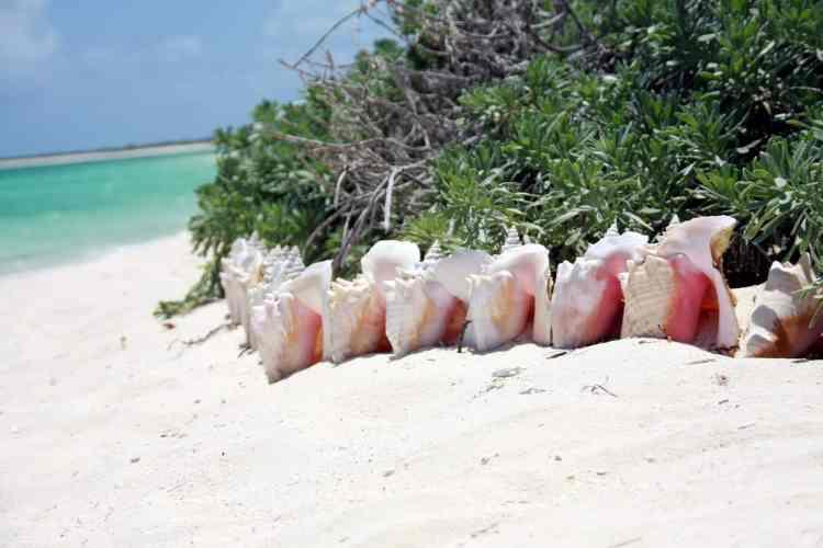Barbados or Turks and Caicos