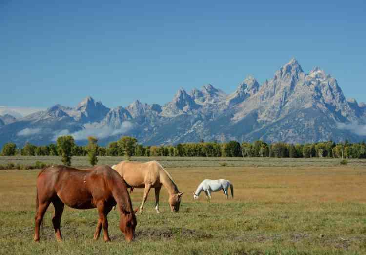 Dispersed camping in Wyoming