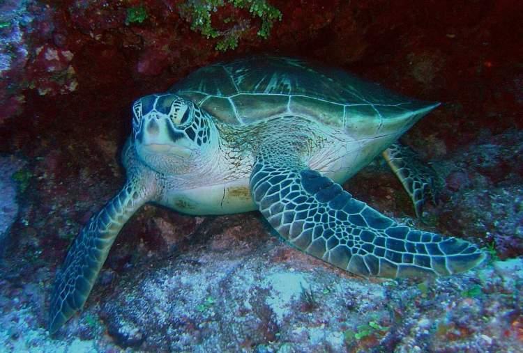 best Caribbean snorkelling  Best Caribbean Island for Snorkelling