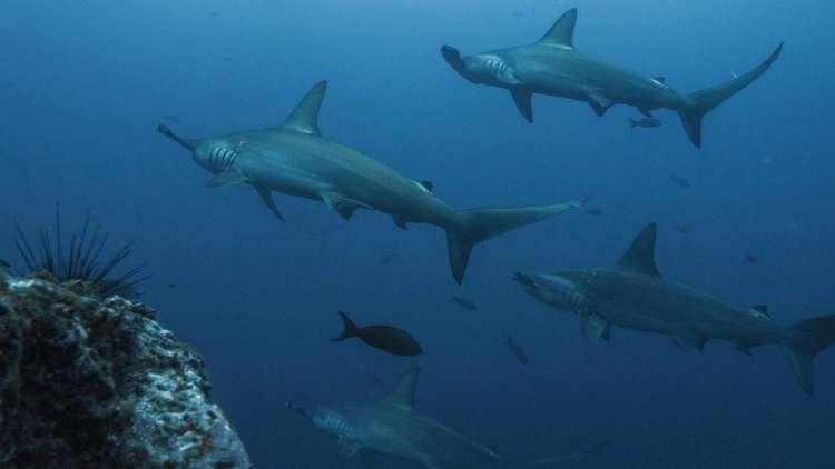 scuba diving in fiji  diving in Fiji