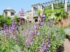 Hampstead Heath Pergola Gardens