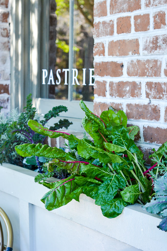 Swiss chard growing in the window at Mirabelle Cafe