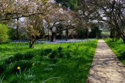 Garden Path - March 2017 - ©NinaMcIntyre