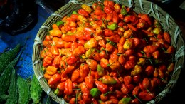 Bhut Jolokia - A type of red chilli. Very Spicy